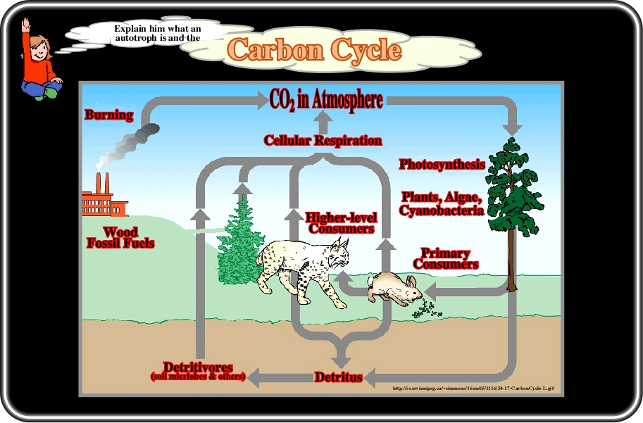 the transfer of substances containing carbon 2009 b the transfer of energy within and between organisms 2008 a hydrogen bonds and their importance in living organisms 2008 b how nitrogen-containing substances are made available to.